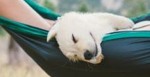 Dogs in Hammocks / Dogs + Trek Light Gear Hammocks = Cuteness Overload