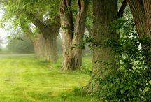 Green, Green Grass of Home / Happy pinning.. no limits.. no blocking..❤️