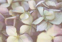Faded Hydrangea / Happy pinning.. no limits.. no blocking..❤️