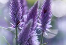 Spring ~ Purple / Happy pinning.. no limits.. no blocking..❤️