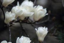 Spring ~ Black / Happy pinning.. no limits.. no blocking..❤️