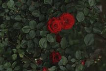 Enchanting Garden / Happy pinning.. no limits.. no blocking..❤️