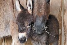 Little Donkey / Happy pinning.. no limits.. no blocking..❤️