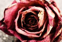 The Tatty Rose / Happy pinning.. no limits.. no blocking..❤️