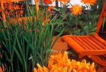 Garden ~ Orange / Happy pinning..no limits.. no blocking..❤️