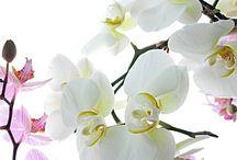 Orchid / Happy pinning.. no limits.. no blocking..❤️