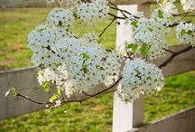 Country ~ Spring / Happy pinning.. no limits.. no blocking..❤️