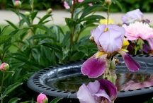 Garden ~ Beauty / Happy pinning.. no limits.. no blocking..❤️
