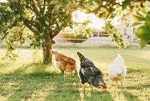 Country ~ SunnyBrook Farm / Happy pinning.. no limits.. no blocking..❤️
