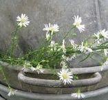 Spring ~ Grey Whispers / Happy pinning.. no limits.. no blocking..❤️