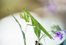 Bugs Life / Happy pinning.. no limits.. no blocking..❤️