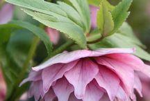 Garden ~ Pink / Happy pinning.. no limits.. no blocking..❤️