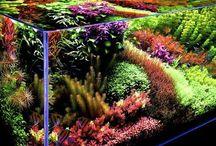 Awesome Aquariums