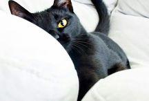 Black Cat / Happy pinning.. no limits.. no blocking..❤️
