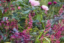 Garden ~ Back Garden / Happy pinning.. no limits.. no blocking..❤️