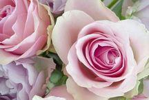 Flowers / Happy pinning.. no limits.. no blocking..❤️