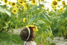 Cottage ~ Sunflower / Happy pinning.. no limits.. no blocking..❤️