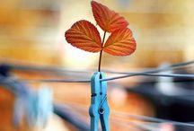Autumn Leaves / Happy pinning.. no limits.. no blocking..❤️