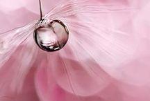 Drops / Water drops, Nature, Flowers, Rain,Plants, Etc!
