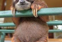 Adorably funny Animals