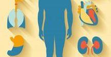 Анатомия, органы