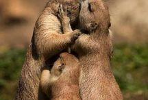 Beauty - Animals
