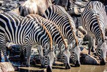 Nice in Tanzania / All about wildlife safaris in Africa