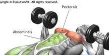 Anatomie voor spier opbouw bij krachttraining / Super duidelijke visuele in beeld gebrachte trainingsoefeningen informatief voor beginnend en gevorderd beoefenaar. Doe er je voordeel mee zou ik zeggen.