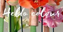 Hello Colour! / Hello Colour!
