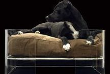 PET FRIENDLY / by TheDesignerPad