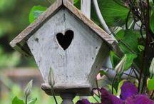 Birdhouse / by Marija Petrovic
