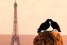 Paris / by Marija Petrovic