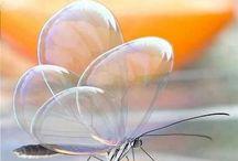 Butterflys / by Marija Petrovic