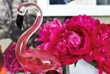 Flamingos,  Pink & Tall