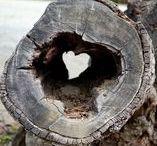 HEARTS♥♥♥