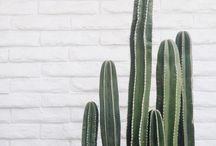 Greenery / Plants!