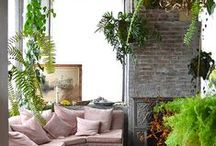 Interior plants. Decor with plants. / Decorate your space with plants. Lively & healthy interiors. Put some green at home!