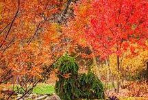 Halloween, Autumn/Fall, Thanksgiving / by Carrie Straka