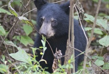 I love The Great Smoky Mountains / Places to visit when visiting Gatlinburg, Pigeon Forge, and Townsend / by Jani Price