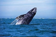 Whales / by ExpeditionTrips