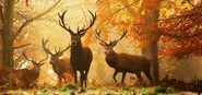 ~wildlife~ / ~~welcome~~no pin limits~~thank you~~