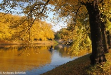 Beautiful autumn in Leipzig / The colorful leaves in golden light - autmn in Leipzig is just beautiful!