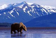 Sweet Alaska!