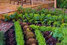 gardening / All things about gardening and plants / by Libby Nichols