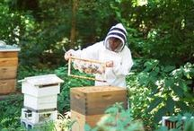 save the bees / apiary, beekeeping how-to, bee art
