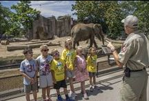 Zoo Classes & Camps / A look inside our acclaimed Education Department. We offer classes and camps for ages 2-14, Stroller Safaris for infants and their parents or grandparents, and photography classes for adults. We also run programs for schools and Scouts.