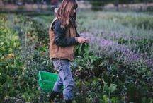 homestead dreams / homestead dreams, ideas, plans, beekeeping, gardening, chickens