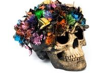 Decorative Skulls / Decorative Skulls for sell