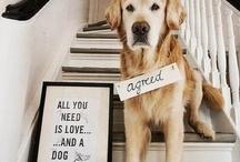 Puppy Love / by Christina Bonner