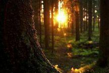 Forest / by Gail Cochran